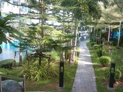 Растения тайского дворика