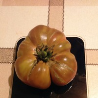 Махровые цветы у томатов