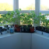 В чём вырастить рассаду? Выбираем ёмкость