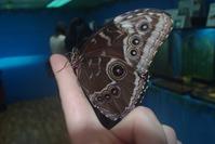 Отдых с детьми. Выставка тропических бабочек и рептилий.