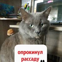 """Неожиданный """"сюрприз"""" или Как простить кота!?"""