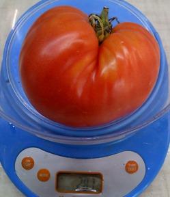 Выбрала томаты для посева!