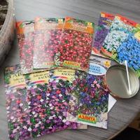 Черенкование комнатных растений и начало посевной