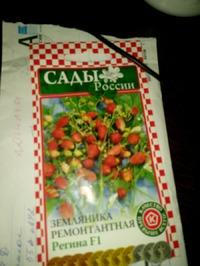 Спасибо Наташе, за семена.