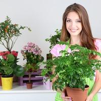 Какие комнатные растения положительно влияют на здоровье?