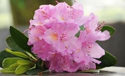 Цветы, которые радуют нас зимой