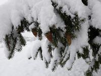 Придет и к вам зима...