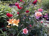 Что уже цветет в июле?