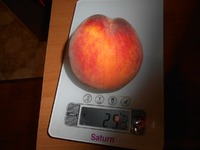 Первый персик.
