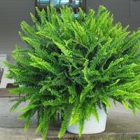 Растения, которые помогут очистить воздух в доме