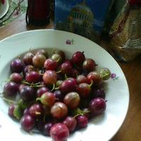 Лето. Июль. Жара и первые овощи на грядках.