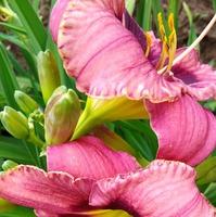 Красота июльского цветения