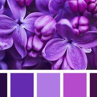 Сиреневый цвет в интерьере: 5 простых идей