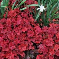 Какие садовые цветы можно не поливать?