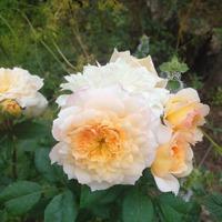 В быстро вянущих лепестках цветка больше жизни, чем в грузных тысячелетних глыбах гранита. (Людвиг Фейербах)