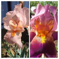 Продолжение цветения в саду