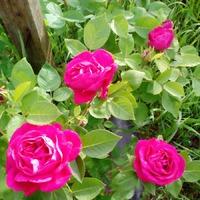 Мои цветочки... только они и радуют...