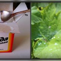 Пищевая сода для подкормки растений и не только