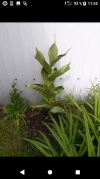 Опознайте растение плиз!