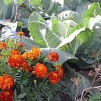 Маленькие огородные хитрости большого урожая