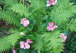 Самые древние земные растения