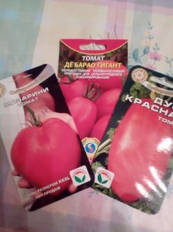 Новый метод (для меня) посадки помидор.