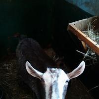 Мои козюли. Часть 2.