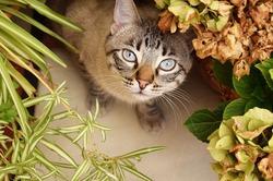 Коты и цветы: как уберечь их друг от друга?