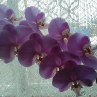 Любимые цветы-орхидеи.
