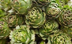 Артишоки в огороде: как вырастить?
