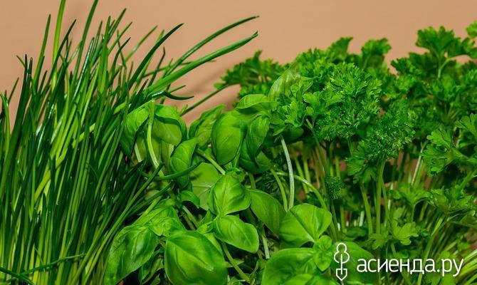 Витаминный зеленый конвейер на подоконнике