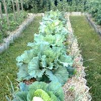 Как добиться успешного земледелия.