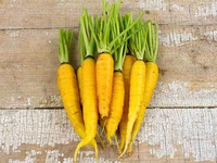Семена кормовой моркови