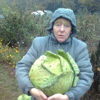 Готовимся к посеву капусты.