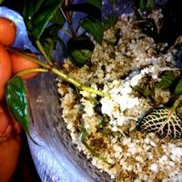 Укорениение черенков в вермикулите