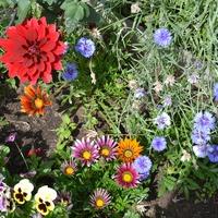 Немного лета, или как же без любимых цветочков.