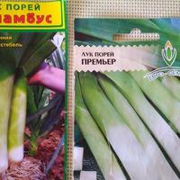 Выращиваем лук порей рассадой