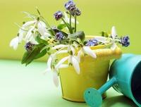 Чтобы полив не навредил комнатным растениям