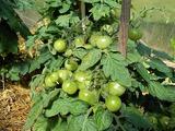 Органические удобрения из костной муки как применять на огороде