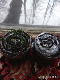 Март 2018: посадила на рассаду брокколи и цветную.