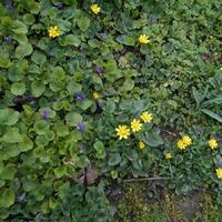 Цветы во дворе 27.03.