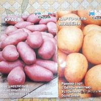 Картофель семенами. Сорта Краса и Милена.