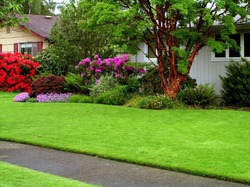 Какой неприхотливый газон посадить?