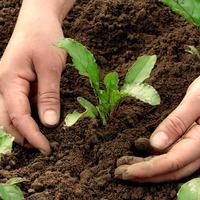 Что посадить и посеять в мае