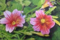 Невероятный рисунок для скромного цветка