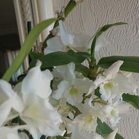 Моя любимая орхидея. Расскажите, что с ней делать?