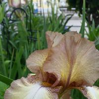 Мое лето, мое цветочки- серия 5