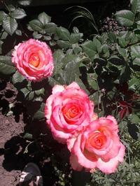 Цветочки ягодки и огурчики, вообщем лето пришло!