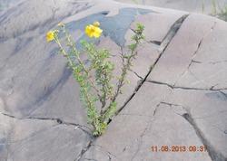 Растения, пробивающиеся сквозь камни