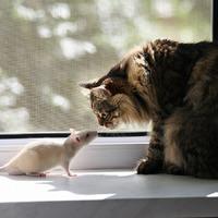Нужны советы владельцев кошек